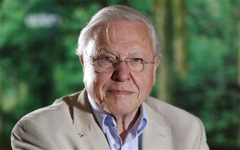 David Attenborough: Drop 'monotonous' environment lectures from wildlife shows - Telegraph.co.uk | Bees | Scoop.it