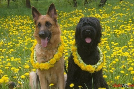 Dog breeds pictures photos - high-quality photos | Dog Lovers | Scoop.it