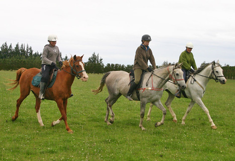 Benefits of rising trot identified in research - Featured, Lameness, News - Horsetalk.co.nz   Equine Health Care   Scoop.it