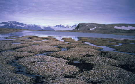 Report Says IPCC Needs to Address Melting Permafrost   Climate Central   Sustain Our Earth   Scoop.it
