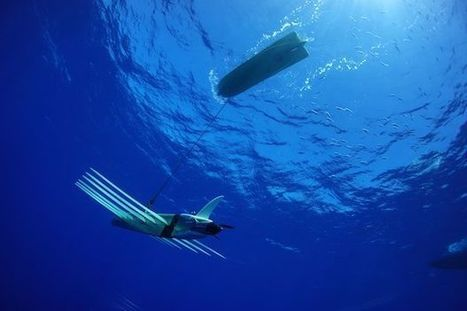 5 Technologies that are Helping Save the Oceans | Technology in Business Today | Scoop.it