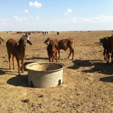The waiting game: Graziers tell of life in drought-stricken Queensland | Food issues | Scoop.it