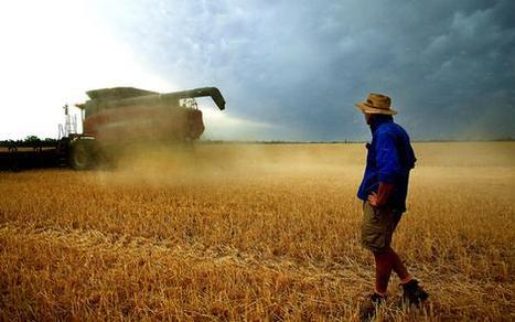 Aussie rains too late to help wheat - but boost to cotton, sorghum   Grain du Coteau : News ( corn maize ethanol DDG soybean soymeal wheat livestock beef pigs canadian dollar)   Scoop.it