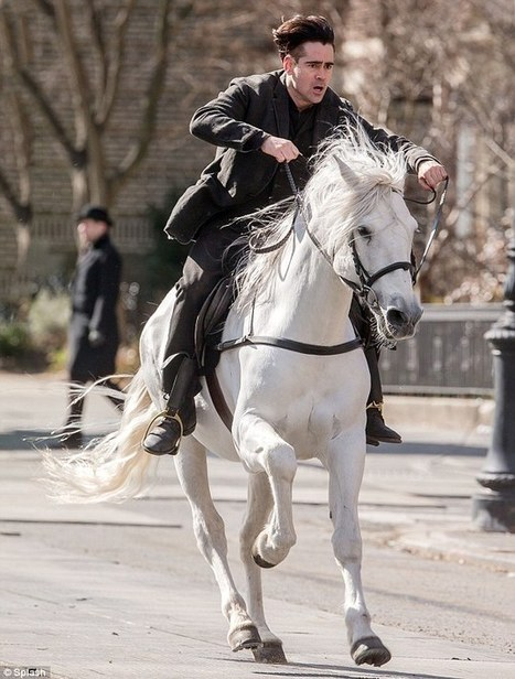 Colin Farrell gallops on his white steed up the streets of New York | Horse Fencing & Horse Stalls | Scoop.it