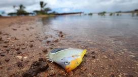 What's worse than an oil spill? A molasses spill - Quartz | Oil Spill | Scoop.it