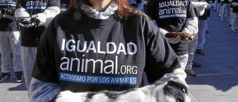 La línea roja de la experimentación: ¡¡¡ Crear perros DROGADICTOS !!! | Regulación experimentación y protección animal | Scoop.it