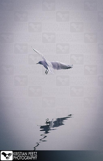 Pic of the week - 2014/43: Seagull Reflection | All things about Photography | Scoop.it