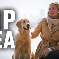 How United Airlines Killed A Supermodel's Dog   OHS, the Aviation industry & Myself   Scoop.it