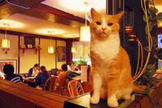 Bar para gatas y gatos - AIM Digital | Mascotas | Scoop.it