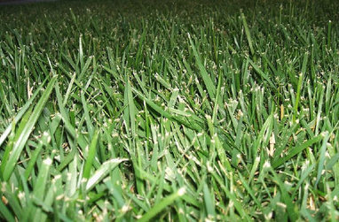 Why Killing Your Lawn Is a Good Idea—And How to Do It - GOOD Projects - GOOD | Sustainable Futures | Scoop.it