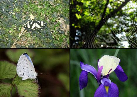 Thefloraandfaunaencounteredinthenationalparks/RediscoverJapan!charmofMt.Fuji | Year 3 Science: Living things in Japan | Scoop.it