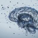 Neuroscienze: il lato cognitivo della corteccia motoria | Neuroscienze applicate | Scoop.it