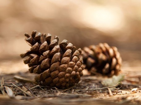 New Biomimetic Fiber, Inspired by Pine Cones, Keeps You Dryer, Longer | Biomimicry | Scoop.it