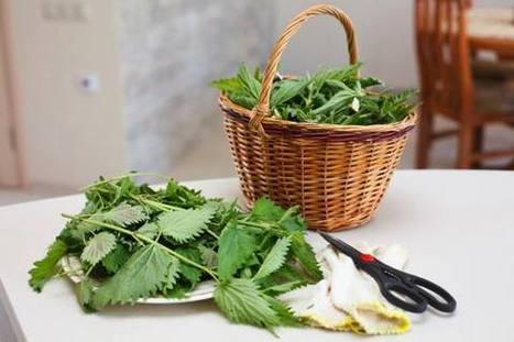 Risotti di Primavera: 10 ricette salutari e depurative | Food and recipes | Scoop.it