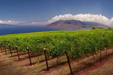 Top 10 unusual places to go wine tasting in the US - Lonely Planet | Route des vins | Scoop.it