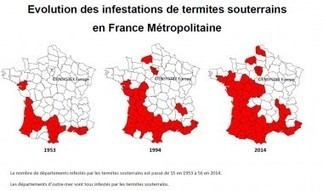 Affiner la réglementation «termites» : les applicateurs ne comprennent pas | Immobilier | Scoop.it