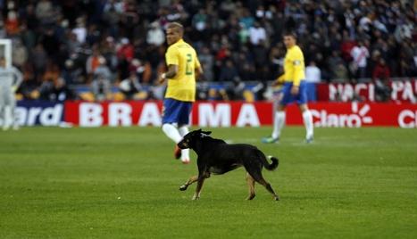 El maltrato animal será considerado delito en Brasil - Periodismo Libre | Pablo Galgo | Scoop.it