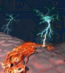 Neuron Tells Stem Cells to Grow New Neurons | Social Neuroscience Advances | Scoop.it