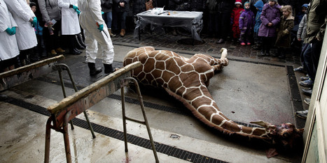 Canada Offered This Giraffe A Spot | Nature Animals humankind | Scoop.it