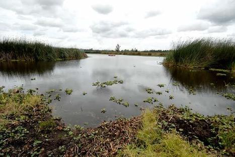 Distrito suspendió obras ilegales en humedal Guaymaral | Agua | Scoop.it