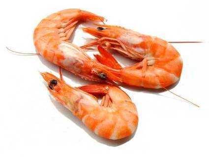 Davao City Bans Selling and Eating of Shrimps | Anti _Nanny | Scoop.it