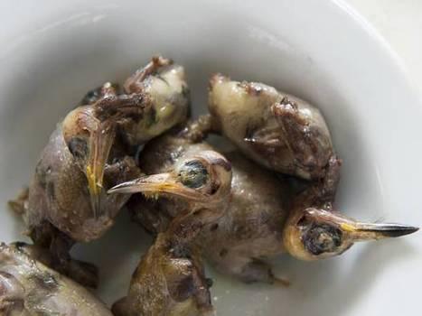Cyprus kills 1.5 million migrating songbirds to eat in fetish dish - Green Prophet   ecoiko nature environment   Scoop.it