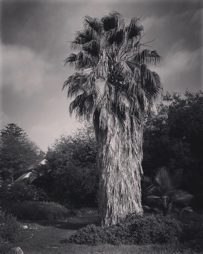 My Word with Douglas E. Welch » Palm tree in Black and White [Photo] | Douglasewelch | Scoop.it