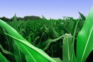 Le premiergroupe coopératif agricole français investit dans… les pesticides | Chimie verte et agroécologie | Scoop.it