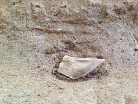 Hallan una letrina de hienas de hace un millón de años en el Barranco de la Boella, Tarragona | Arqueología, Historia Antigua y Medieval - Archeology, Ancient and Medieval History byTerrae Antiqvae | Scoop.it