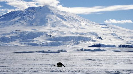Cool as Ice: Newly-Discovered Lake in Antarctica May Hold Prehistoric Life | Natural History, Environment, Science, and Technology | Scoop.it