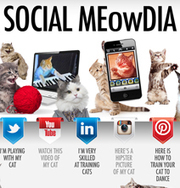 Social Media Sites Explained With Adorable Kittens [Infographic] | Social Media Article Sharing | Scoop.it