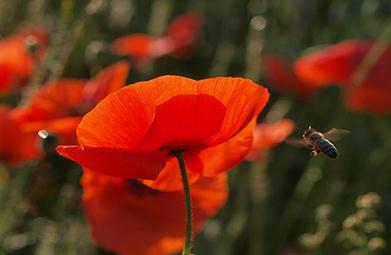 Migros - Des balcons en fleurs pour les abeilles | Villes | Scoop.it
