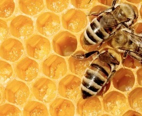 A Sperm Bank for Better Bees | Quite Interesting News | Scoop.it