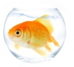 Competing for Blog Readers? Be A Big Fish In a Little Pond | Social Media, SEO, Mobile, Digital Marketing | Scoop.it