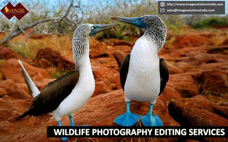 Animal Photography Editing | Pet Photography Editing Services | Outsource image editing services, Image Editing Services | Scoop.it