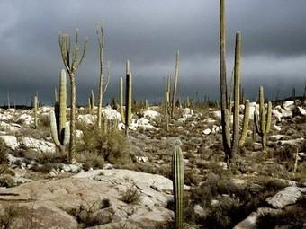 National Geographic | Hot Desert | Scoop.it