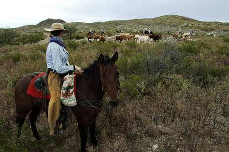 Equestrian Travel Articles - Bring Your Own Horse Vacations: Camping | Horse Care | Scoop.it