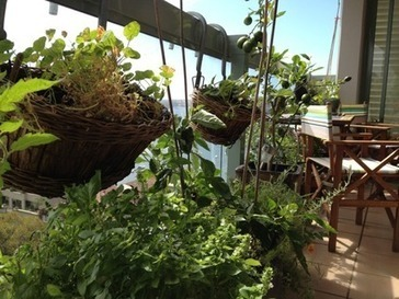 Forum: Urban farming and balcony gardens - free green villages workshop | What's On - City Of Sydney | Vertical Farm - Food Factory | Scoop.it