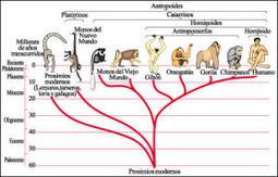 De La Evolución Humana | historian: science and earth | Scoop.it