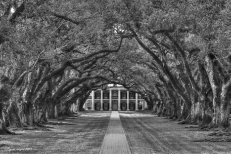 Oak Alley B&W | Flickr : partage de photos ! | Oak Alley Plantation: Things to see! | Scoop.it