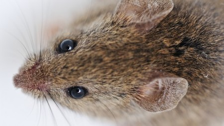 Recharging aging brains could be in the (young) blood | Longevity science | Scoop.it