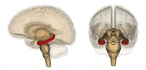 Discovering the brain's memory switch | Brain Imaging and Neuroscience: The Good, The Bad, & The Ugly | Scoop.it