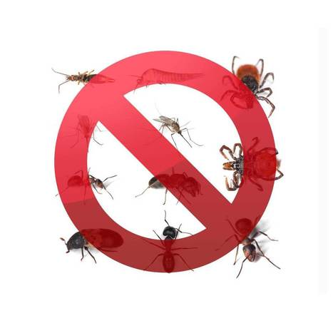 Building a Business on Pest-Control | Health | Scoop.it