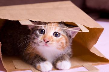 Un adorable chaton n'éprouve aucune émotion pour la guerre en Syrie | Les chats c'est pas que des connards | Scoop.it