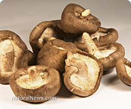 Shiitake mushrooms help fight cancer, reduce cholesterol, and boost immunity | Plant Based Nutrition | Scoop.it