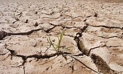 Madagascar drought: catastrophe looms as 850,000 go hungry, says UN | Risques naturels et technologiques infos | Scoop.it