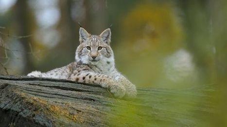 Artenschutz: Jede dritte Art in Deutschland ist bedroht   Agrarforschung   Scoop.it