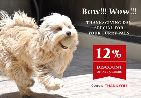 Making This Thanksgiving Day Special For Your Pet | BestVetCare | Pet Care | Scoop.it