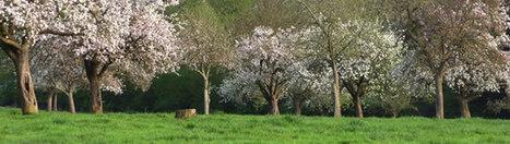 Panorama de l'agriculture et de l'agroalimentaire normand - Chambre régionale d'agriculture de Normandie | Graines de doc | Scoop.it
