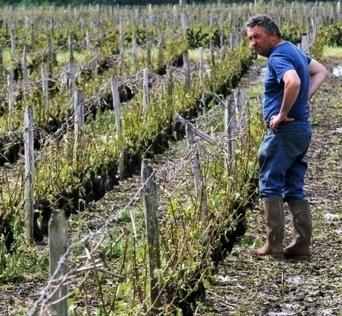 Le vignoble de Vouvray bombardé de grêle - Le Républicain Lorrain | Le vin quotidien | Scoop.it